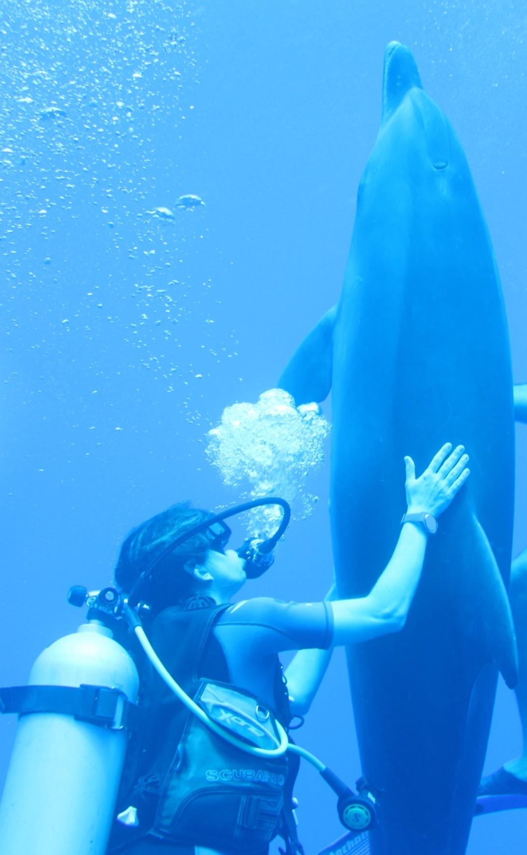 Mergulho Rangiroa - Golfinhos Rangiroa - Lua de Mel Polinésia Francesa